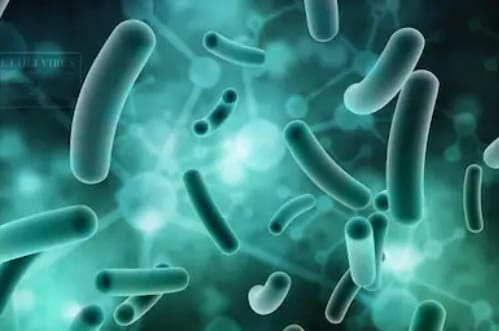 Your Phone May Be Covered With Bacteria